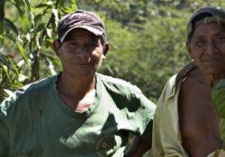 Støt regnskoven - mere end bare god samvittighed